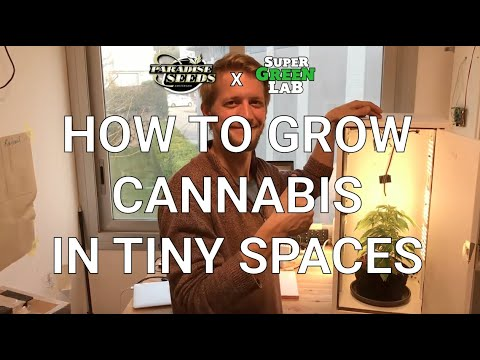 HOW TO GROW CANNABIS IN TINY & STEALTH SPACE!
