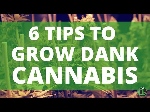 How to Grow Cannabis Indoors [6 MOST IMPORTANT TIPS]