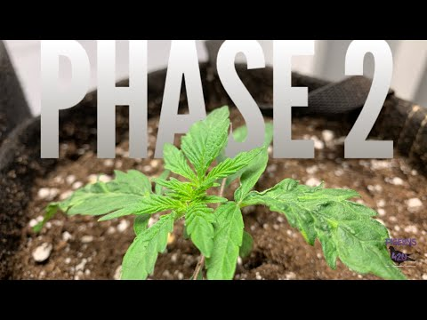 Start the Growth - Transplanting - Grow With Me - Episode 4