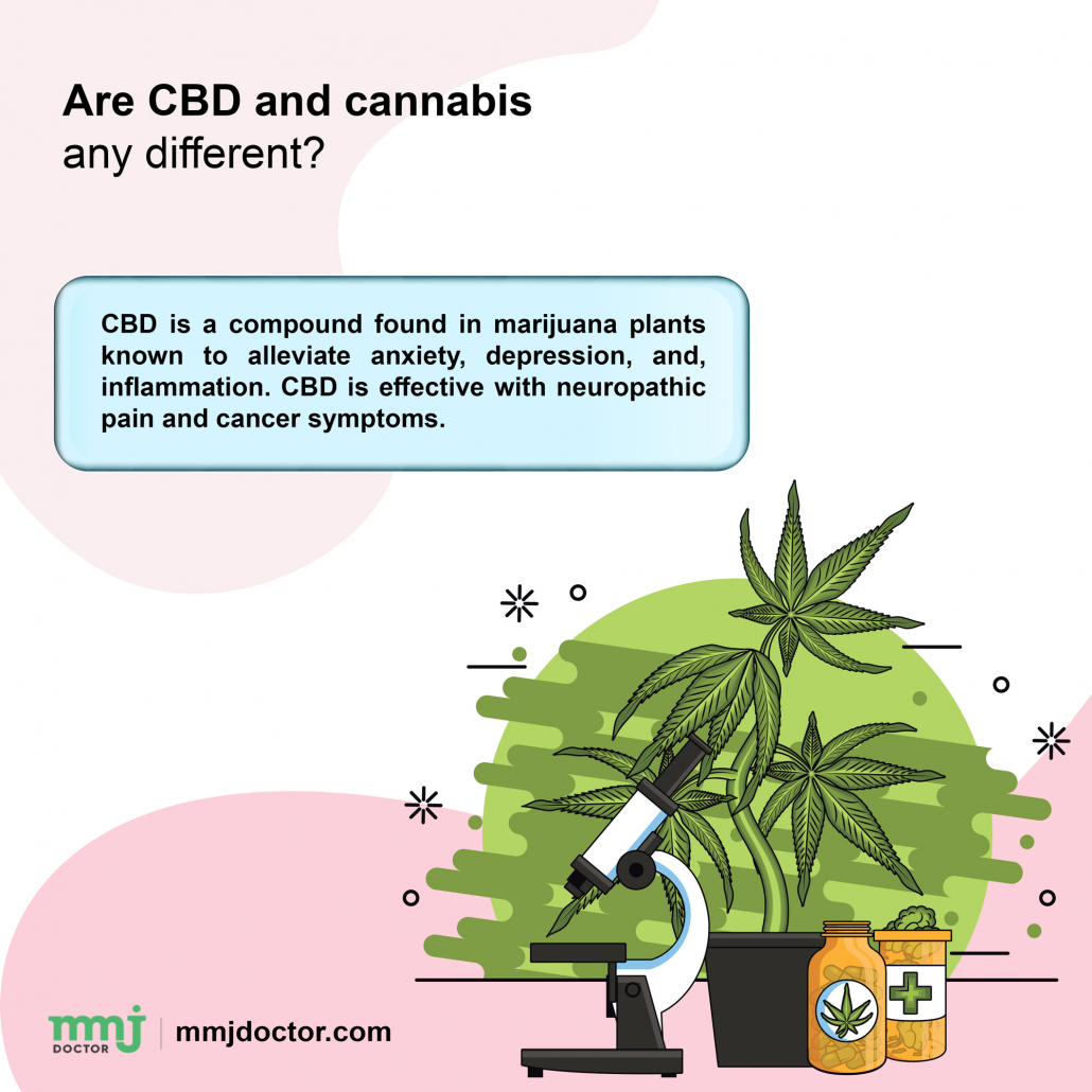 CBD and cannabis difference