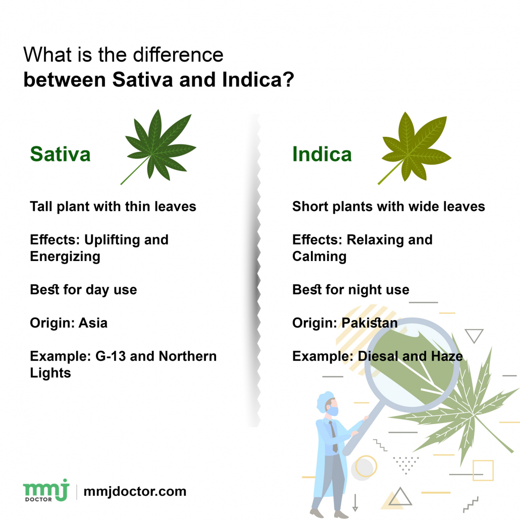 Difference between Indica and Sativa