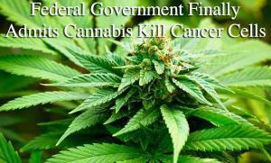 Federal government confirmed that cannabis kills cancer