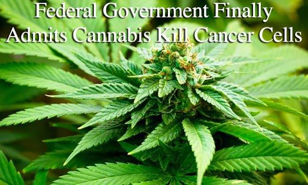 Cannabis-Heals-feds-confirmed-marijuana-kills-cancer