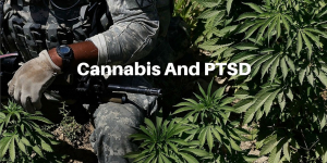 CANNABIS AND POST TRAUMATIC STRESS DISORDER PTSD