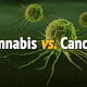 MEDICAL MARIJUANA KILLS CANCER