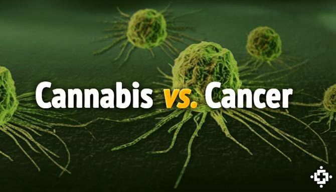 MEDICAL-MARIJUANA-KILLS-CANCER