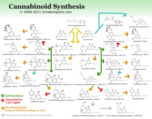 WHY CANNABIS HAS SO MANY DIFFERENT APPLICATIONS AND EFFECTS