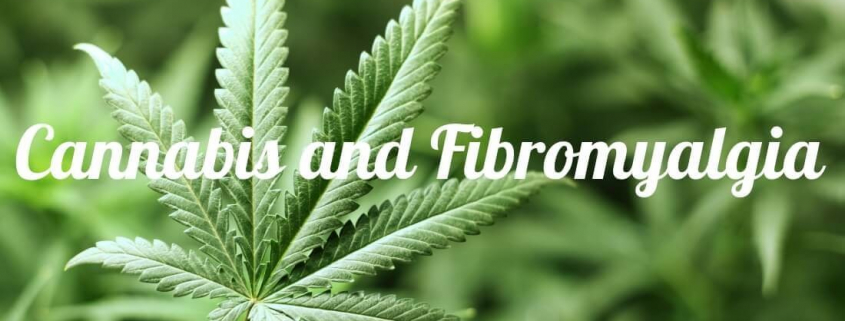 cannabis-and-fibromyalgia-mmjdoctor