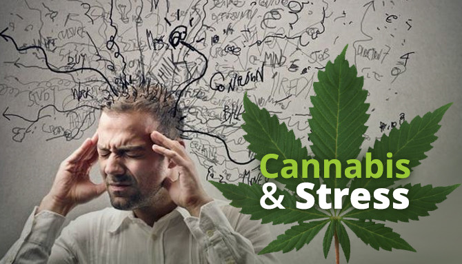 cannabis and stress anxiety medical marijuana doctor