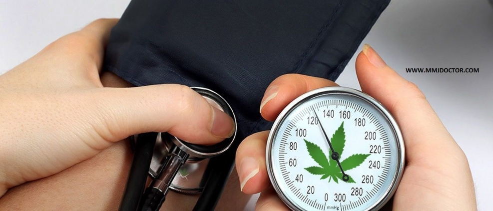 cannabis can help high blood pressure mmjdoctor