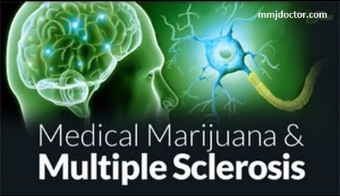 medical marijuana benefits for multiple sclerosis