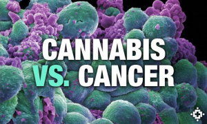 medical cannabis vs Cancer