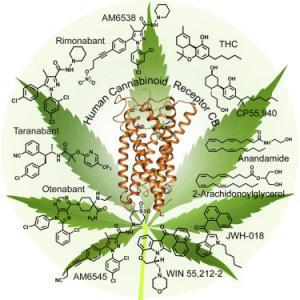 crystal structure of the human cannabinoid system