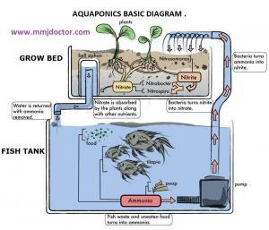 Grow cannabis aquaponically with mmjdoctor.com