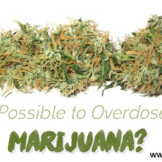 can you overdose on weed mmjdoctor