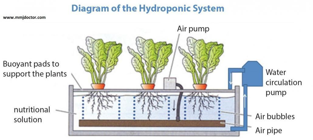 hydro_diagram-growing-cannabis-hydroponically-mmjdoctor