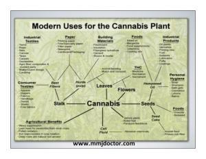MODERN USE OF THE CANNABIS PLANT