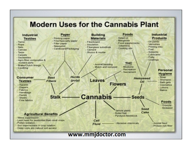 industrial-hemp-the-incredible-weed-modern-use-of-cannabis-plant