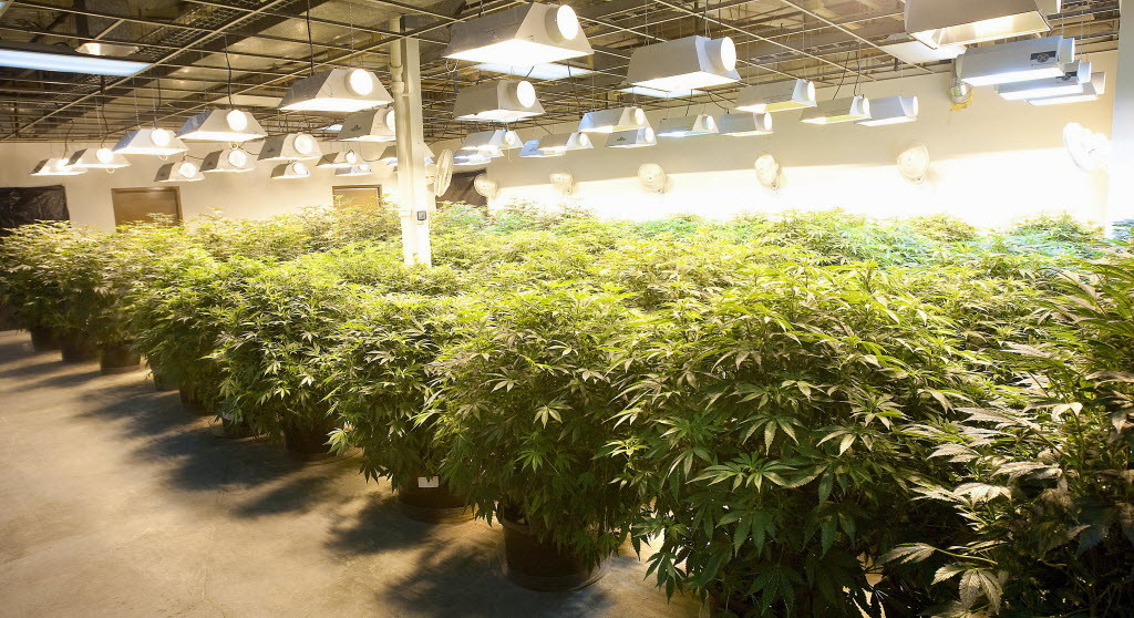 Medical Marijuana Growers license