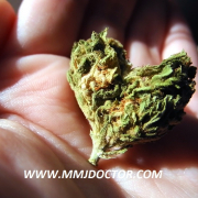 cannabis heart mmj doctor online sex and cannabis