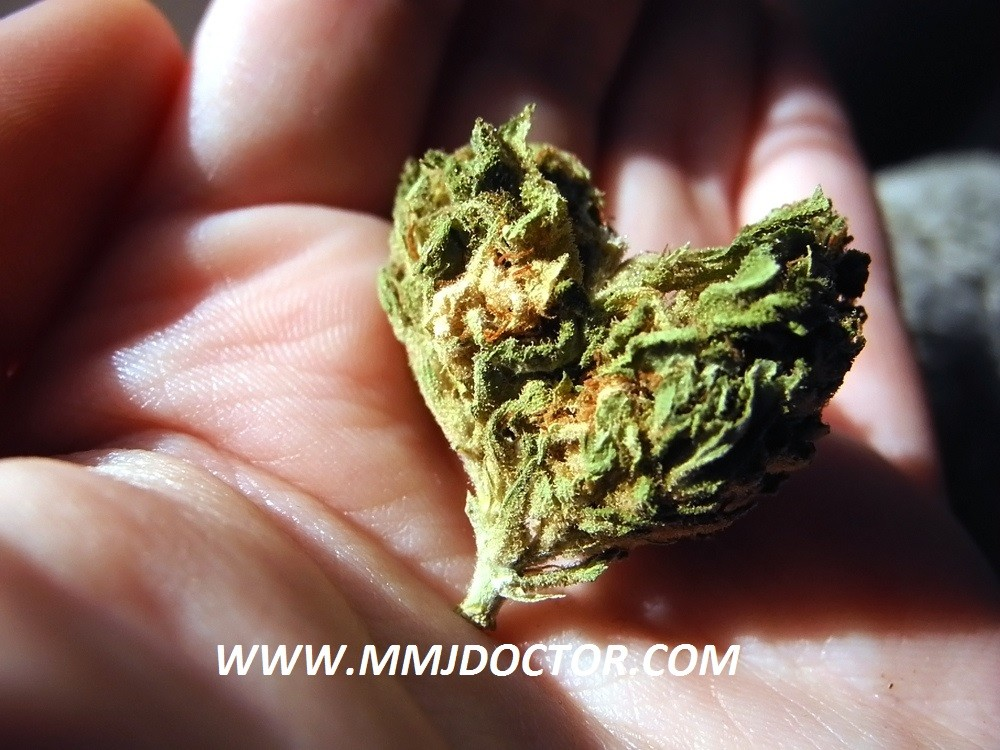 cannabis heart mmj doctor online