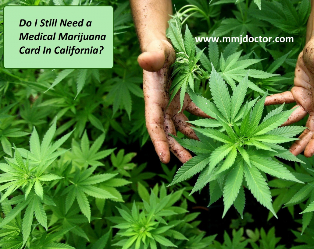 mold free marijuana no mold cannabis plant