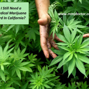 mold free marijuana no mold cannabis plant e1490675321764