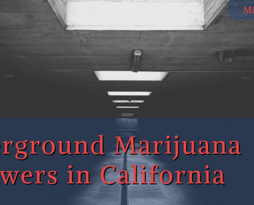 Underground Marijuana Growers in California: After Proposition 64