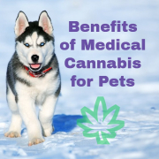 Medical marijuana benefits for pets