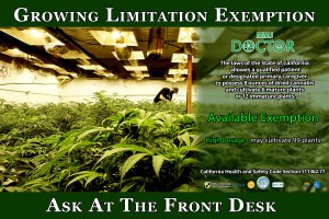 Medical Cannabis Cultivation license