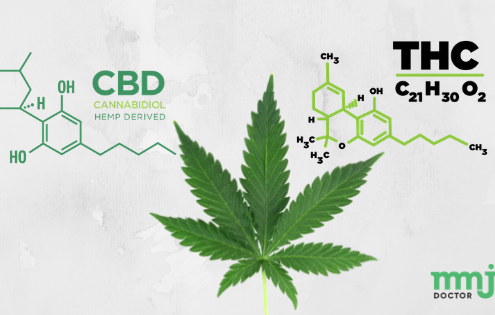 CBD How is It Different from Marijuana