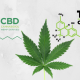 CBD vs THC - CBD How is It Different from Marijuana