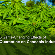 Effects of Quarantine on Cannabis Industry