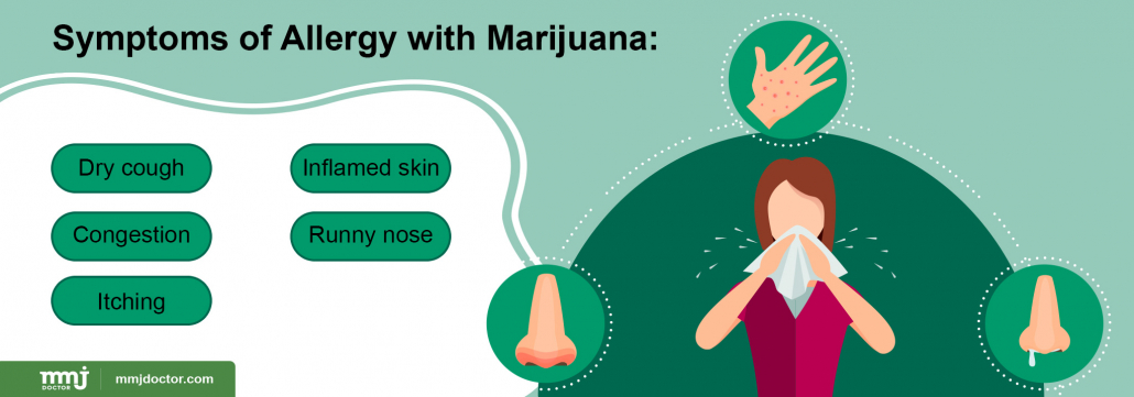 Marijuana allergy