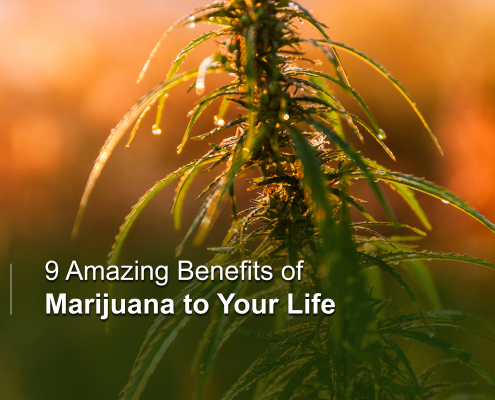 Amazing Benefits of Marijuana to Your Life