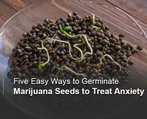 Germination treats anxiety