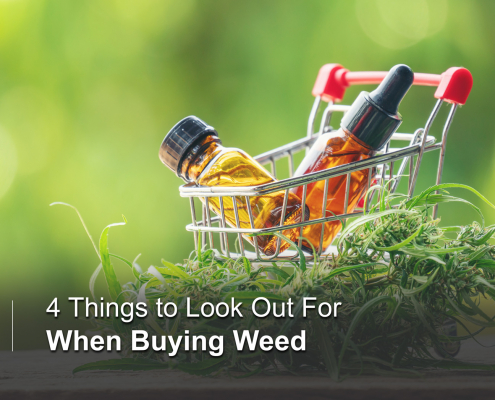 A Beginner's Guide to Buying Cannabis