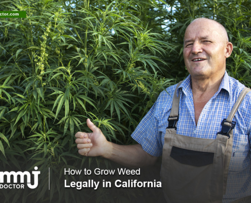 Marijuana Growers in California: After Proposition 64