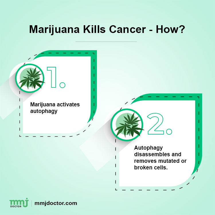 How Does Marijuana Kill Cancer Cells 2018 Study 1