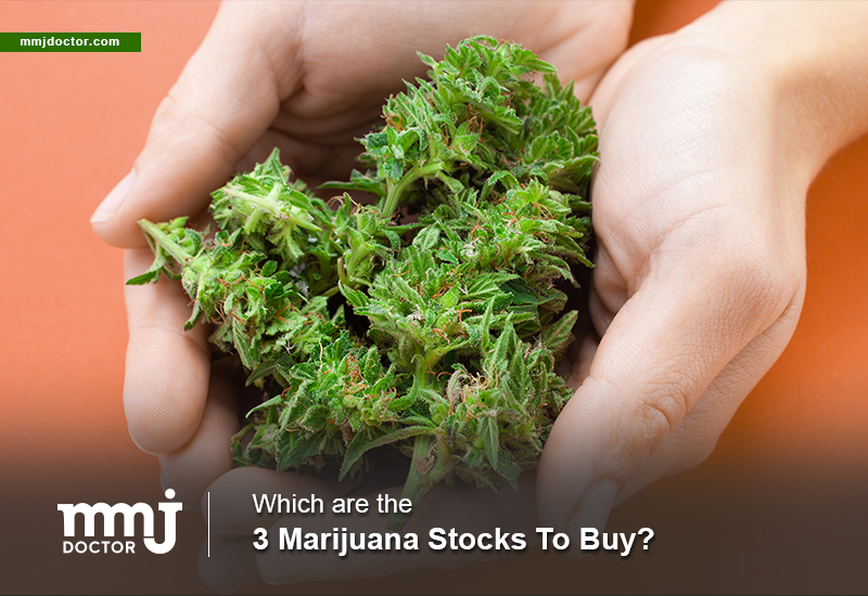 Which Are The 3 Marijuana Stocks To Buy? - MMJ DOCTOR