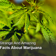 Amazing facts about Medical Marijuana